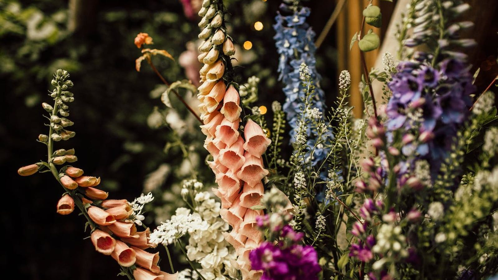 Apricot foxgloves and blue delphiniums