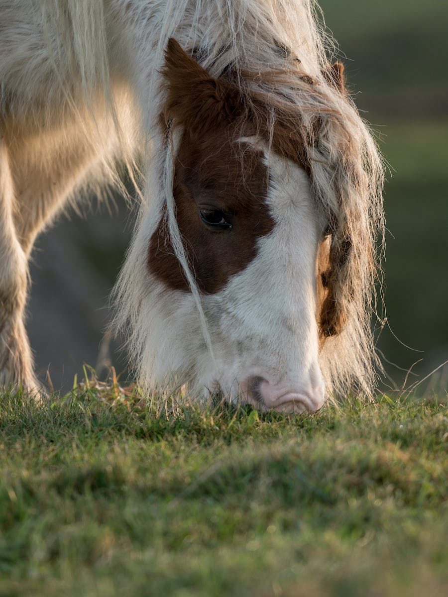 A horse grazing at Sunrise