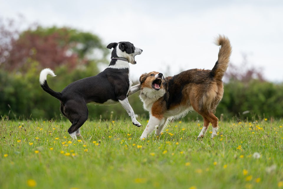 Rivendell CL - Dog Friendly