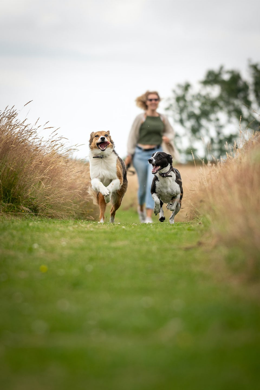Resthaven Farm CL - Dog Friendly