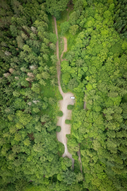 Nutcombe Bottom Tall Trees Trail Exmoor