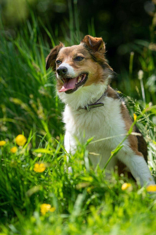 Dog Friendly CL - The Caravan and Motorhome Club