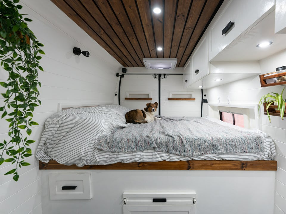 Rory the dog lead on the bed in the van