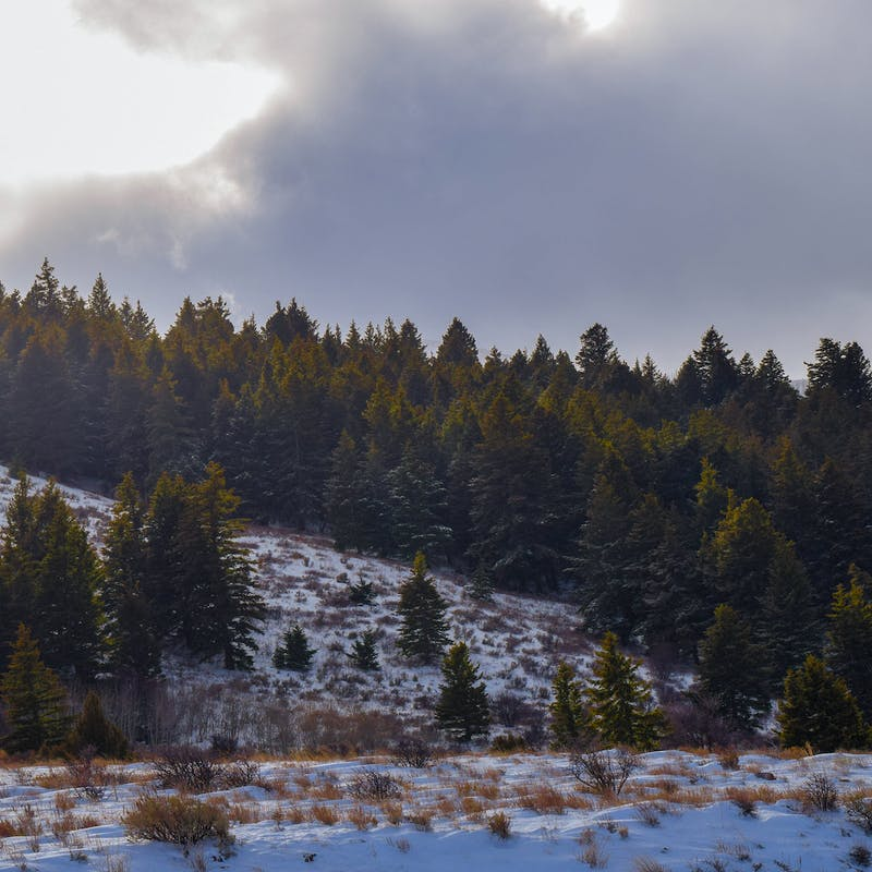 Sun breaking through clouds over a hillside of dense pine trees and snowy grass