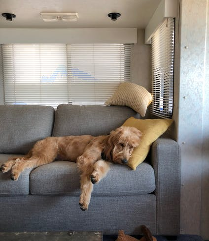 A dog lounging on an RV sofa.