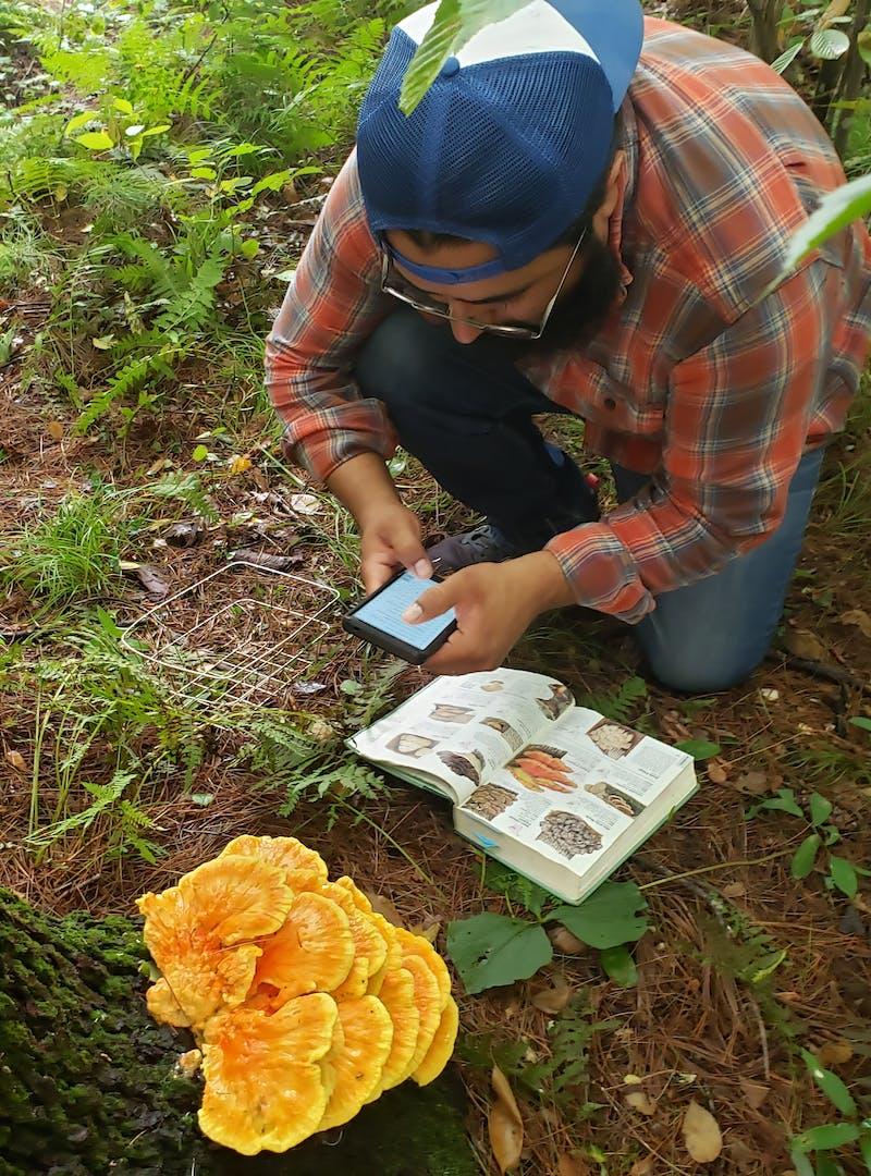 Sandra Peña's husband identifies a large mushroom on the forest floor.
