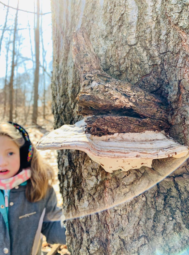 Young girl approaches a tree trunk with bark growth