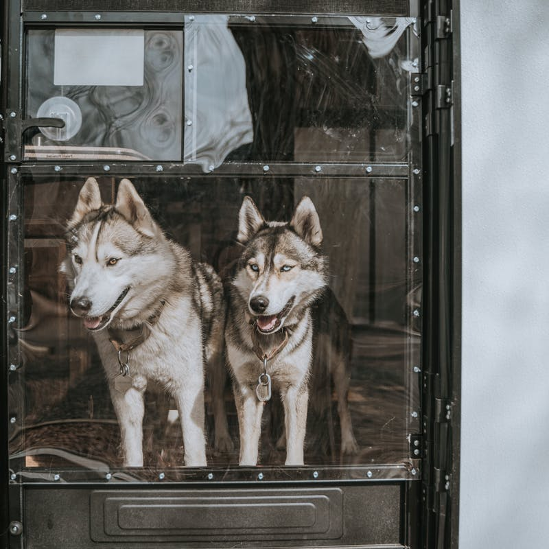 Two huskies looking out an RV door window.