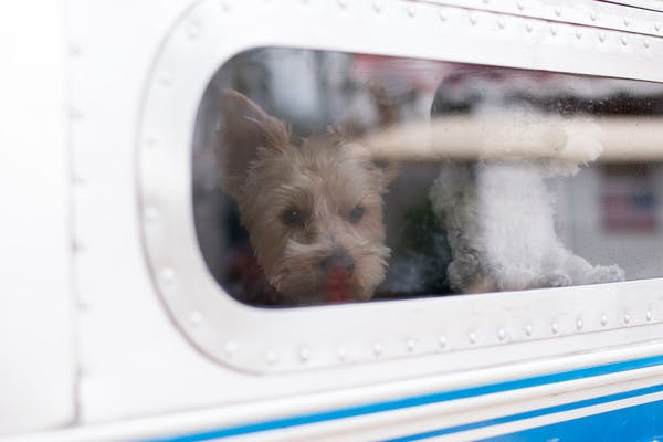A view from the outside of an RV looking into the RV showing Christina Griffin's dogs.