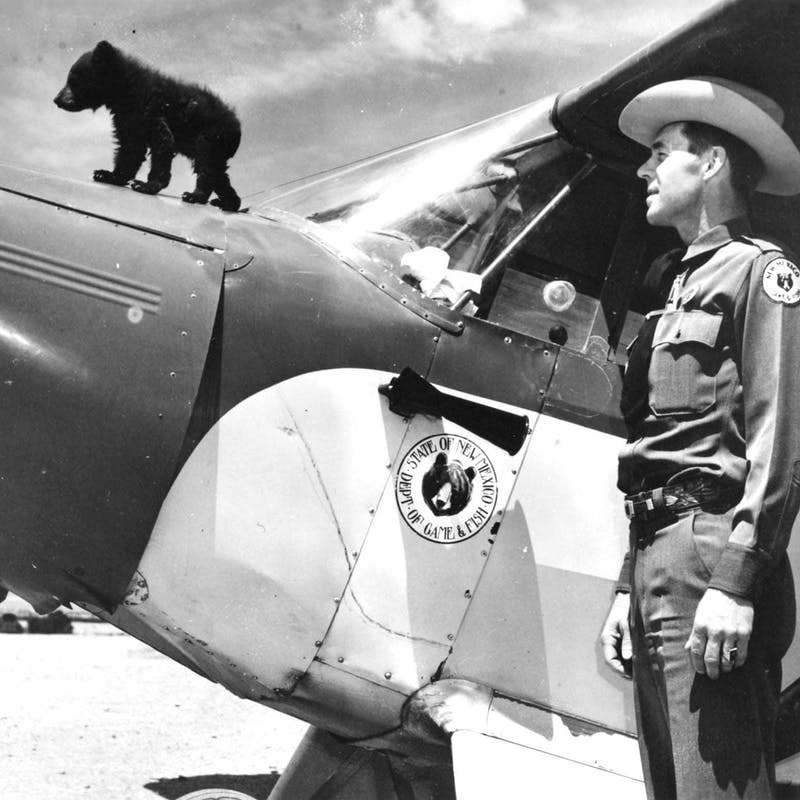 Black and white photograph of bear cub on top of airplane with park ranger in 1950