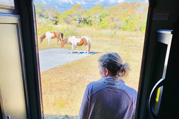 Stephanie Puglisi looking out over Assateague State Park with wild ponies grazing a few yards away.
