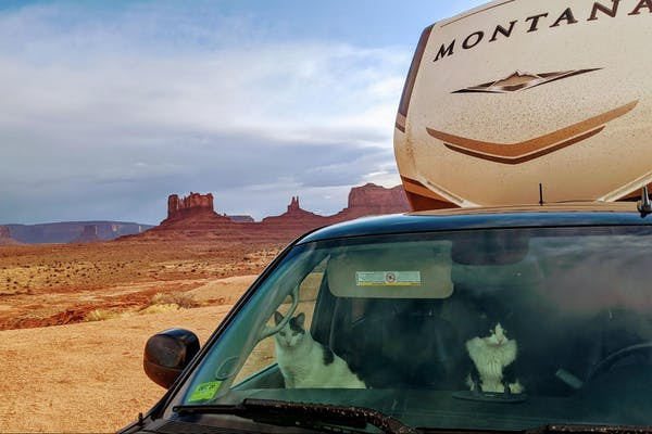 Mike and Brittany Ciepluch's cat peer out the window of their truck in the desert.