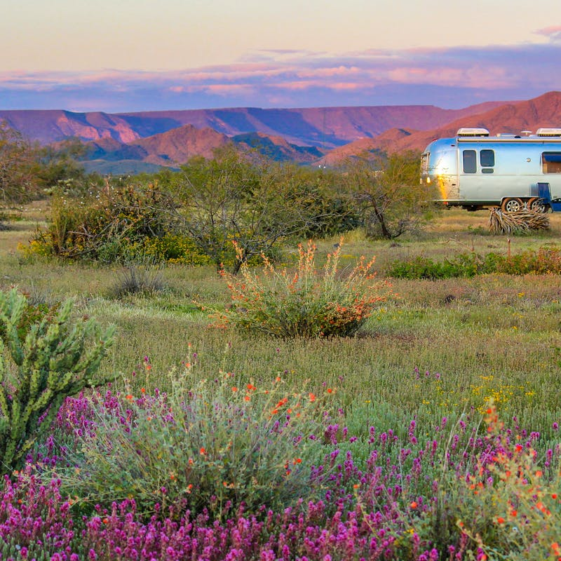 Greg Graham's Airstream parked in a field with wildflowers.