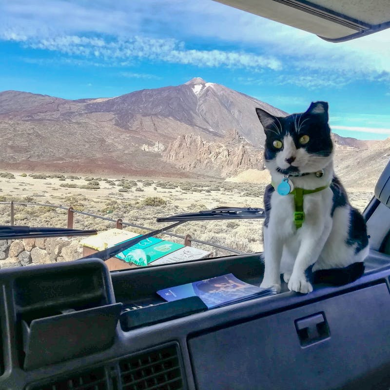 A black and white cat perched on the dashboard of an RV.