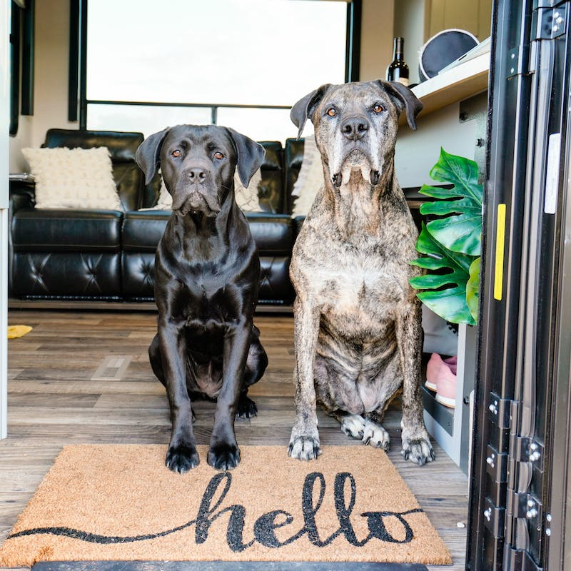 Two dogs sit at the door of an RV