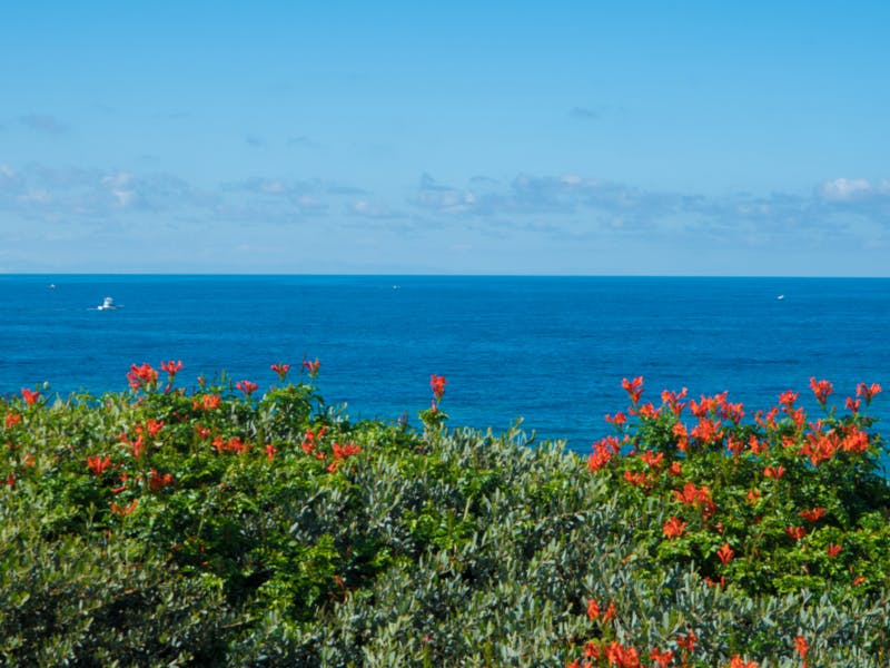 red flowers in front of blue ocean with birds