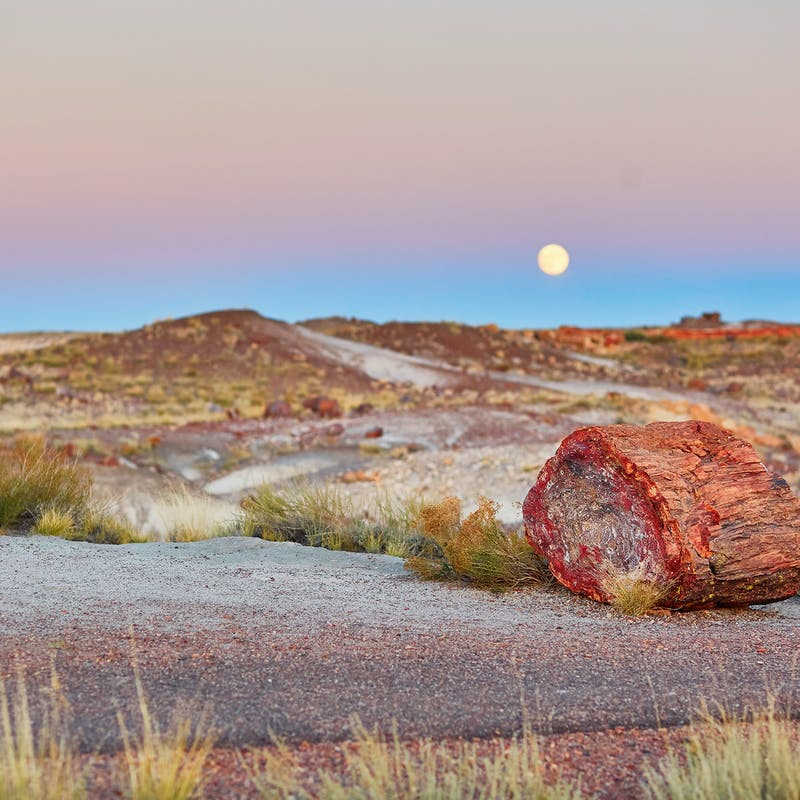 Colorful sunset with red petrified logs on the ground at Petrified Forest National Park