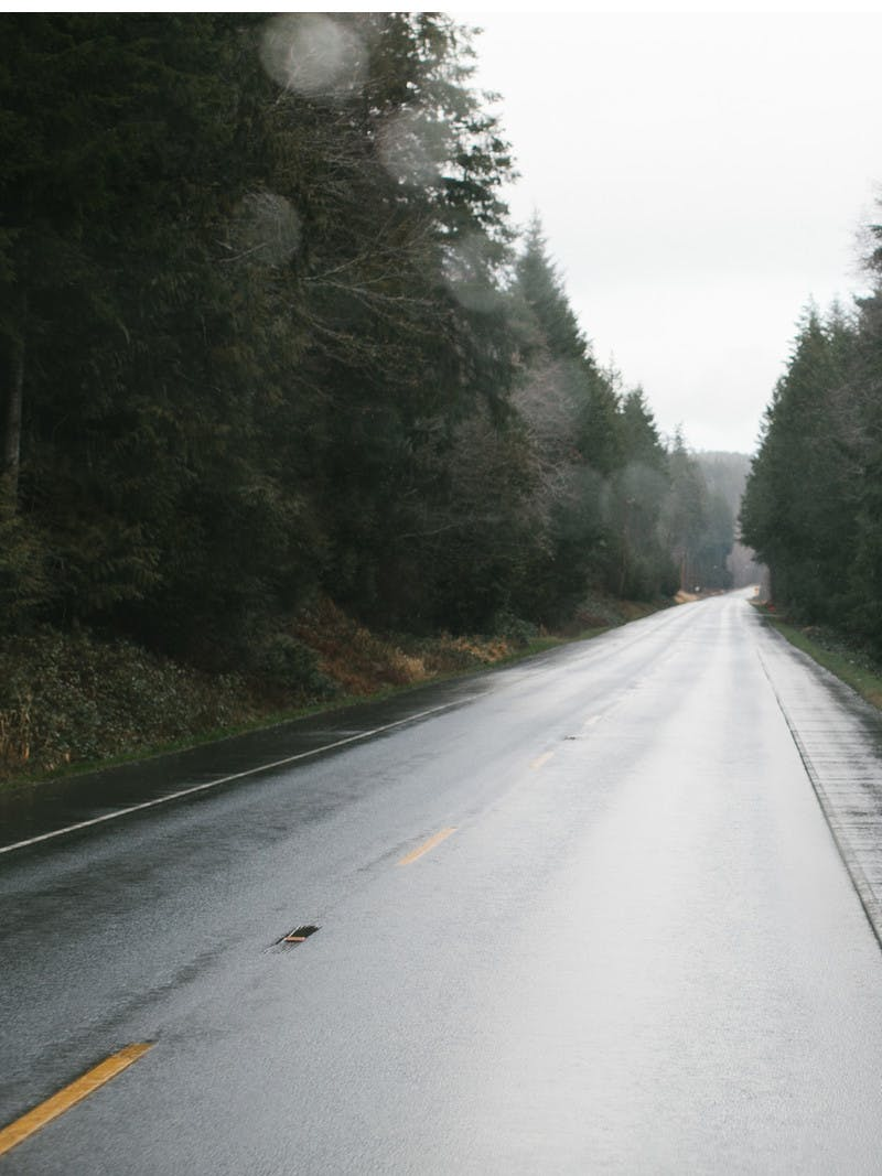 A shot of a wet, black road advancing toward the horizon and lined with pine trees.