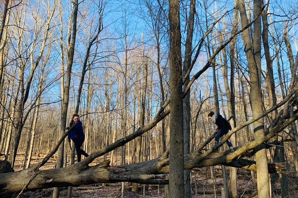Two young girls climb on top of a fallen tree laying among a forest of trees with no leaves