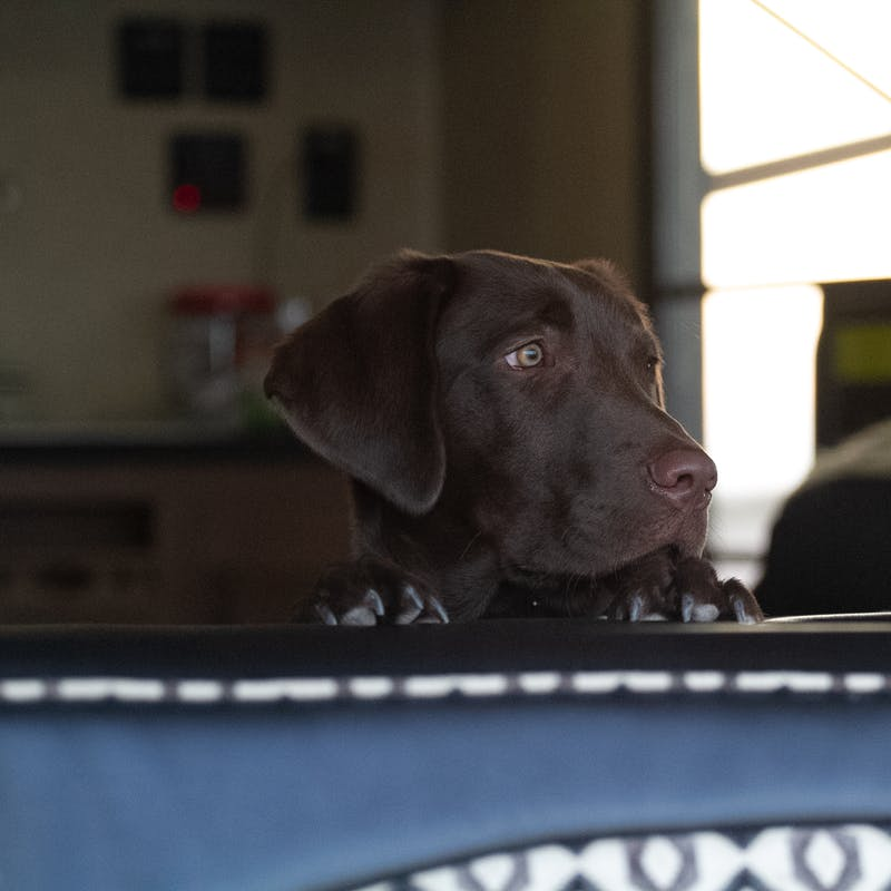 Rossi the dog looking out an RV window.