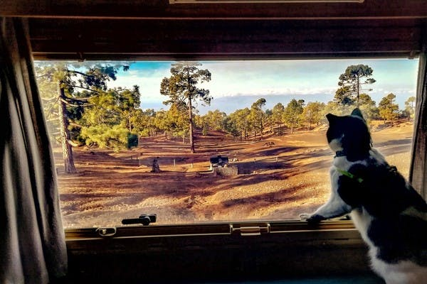 Black and white cat with a collar and harness, looking out the window at rocky dirt and scattered pine trees.