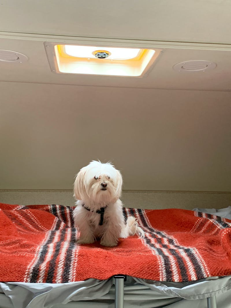 Sarah Hubbart's dog sitting in the loft bed of their Thor Motor Coach Chateau.