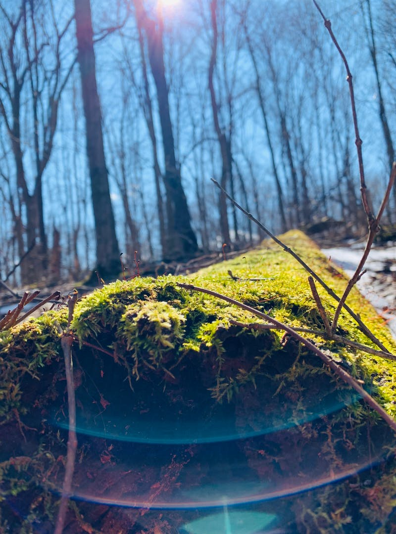 Green moss gross on a fall log with sun shining down