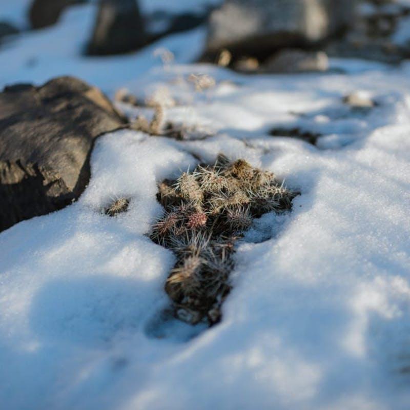 Close up of snow on rocks with dry brush poking through