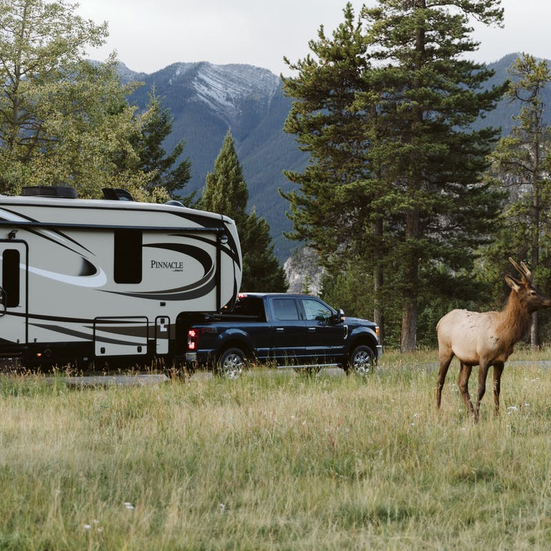 A deer standing in a meadow with the truck and RV off in the background.