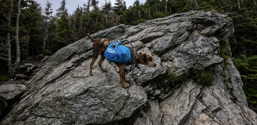 A dog wearing a backpack standing on a craggy rock.