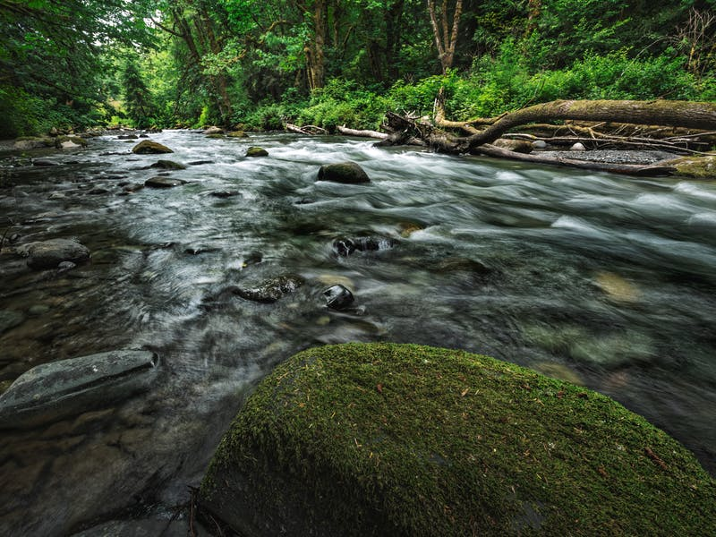 A flowing river in a green forest