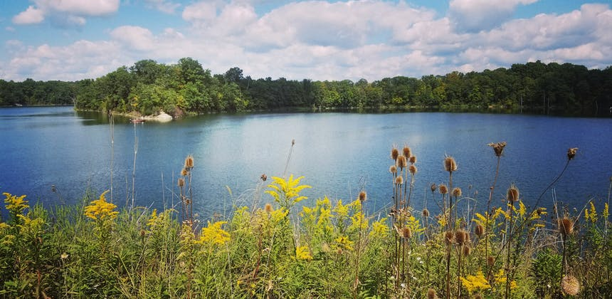 Flowers blooming by a lake at Caesar Creek State Park, Waynesville, Ohio.