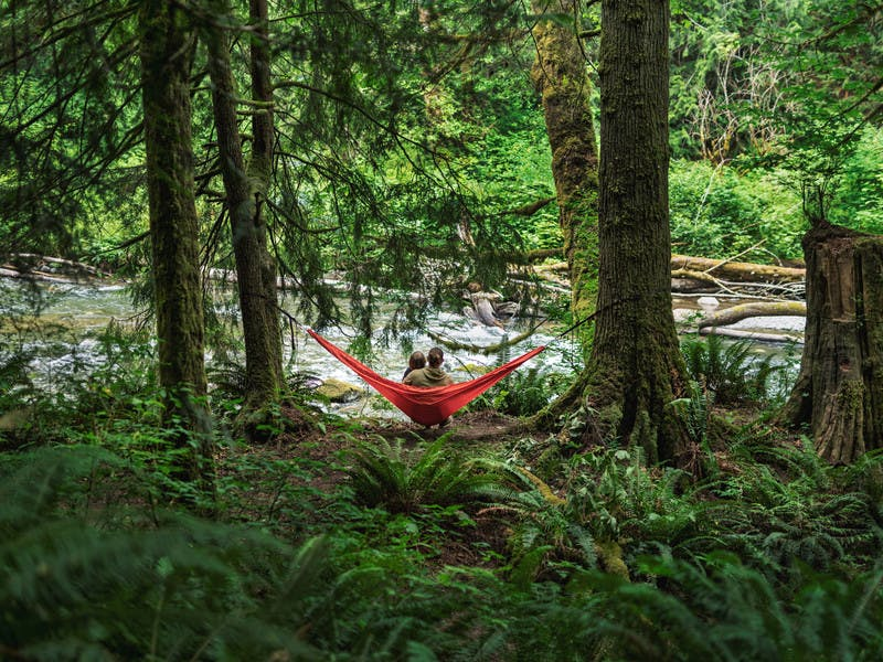 Father in son in hammock on river edge in rainforest