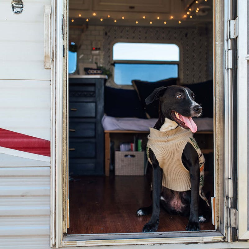A dog standing inside the doorway to an RV.