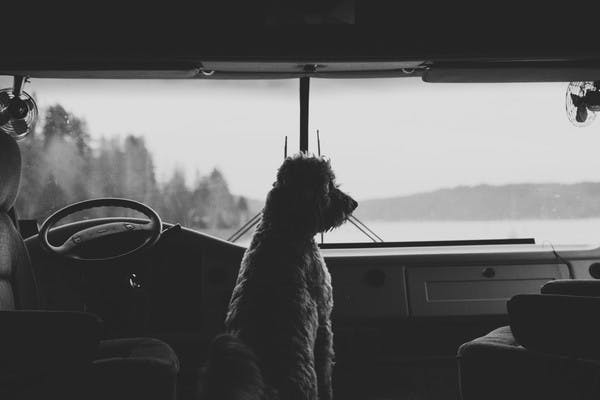 Black and white photo of a curly haired dog looking out the front windshield of an RV.