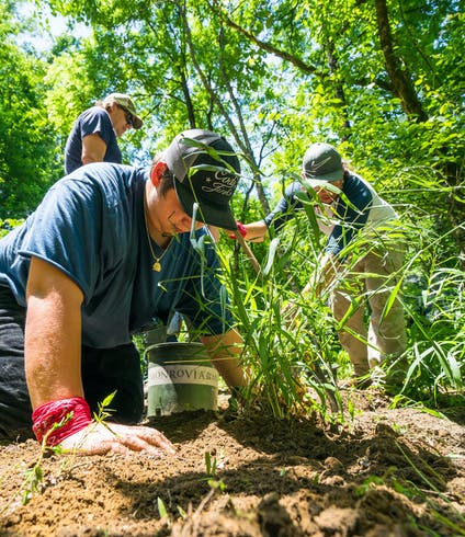 A National Forest Foundation volunteer plants a new tree in the forest.