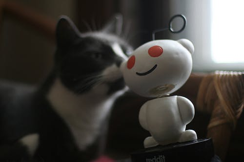 cat kissing reddit mascot