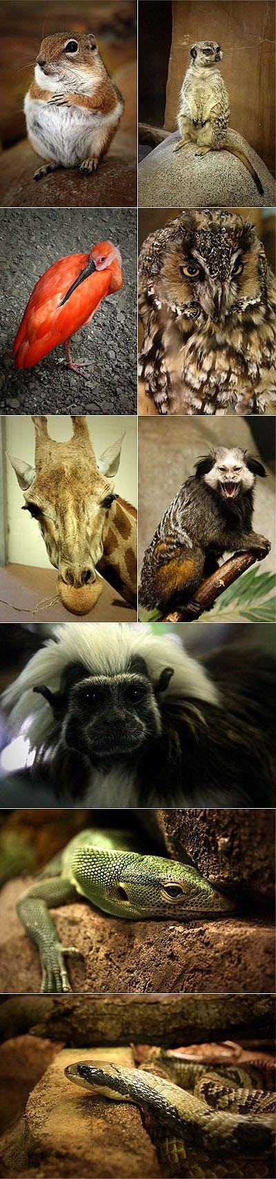 SLC_Zoo