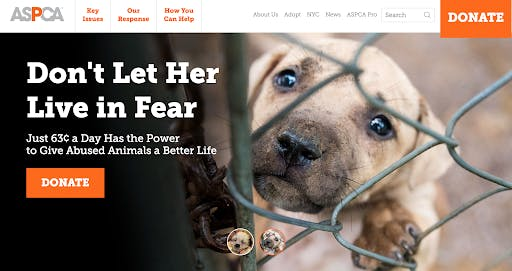 sad puppy behind chain link fence
