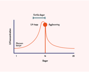 Illustration av kurva för ägglossning