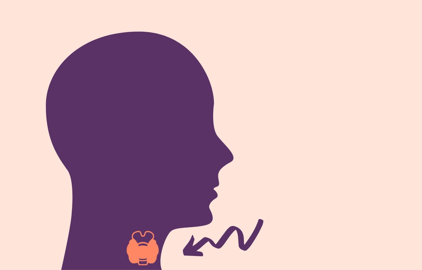 Illustration av huvud med sköldkörtel
