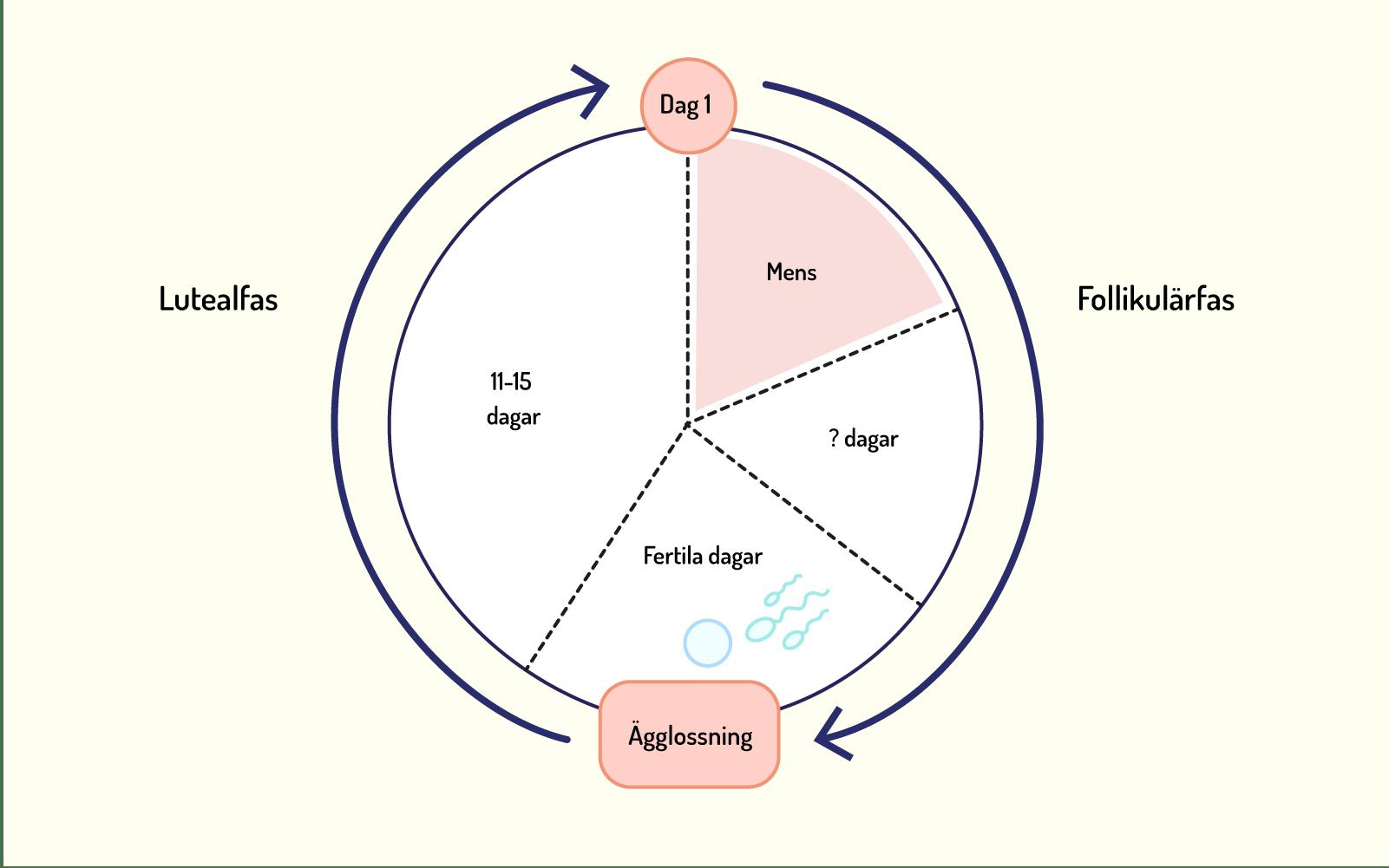 Illustration av menscykel