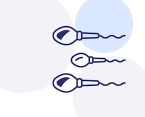 Illustrerad bild av spermier