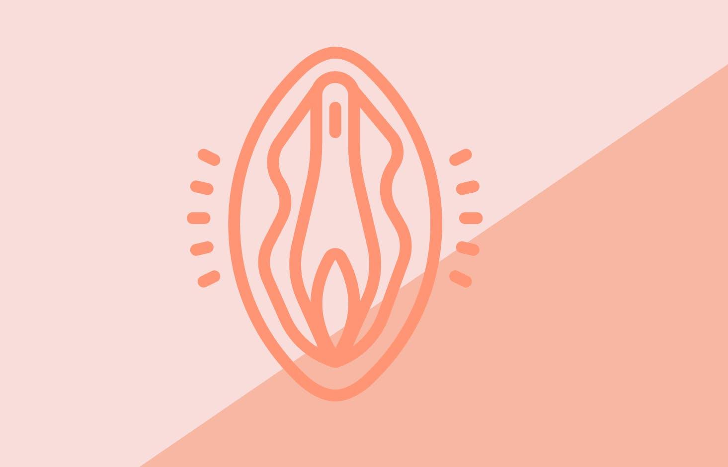 Illustration av vagina