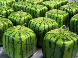An assortment of square Japanese Zentsuji watermelons.
