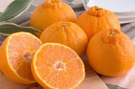 Several Japanese Dekopon oranges, one of Japan's most expensive fruits, sitting ontop of a table.