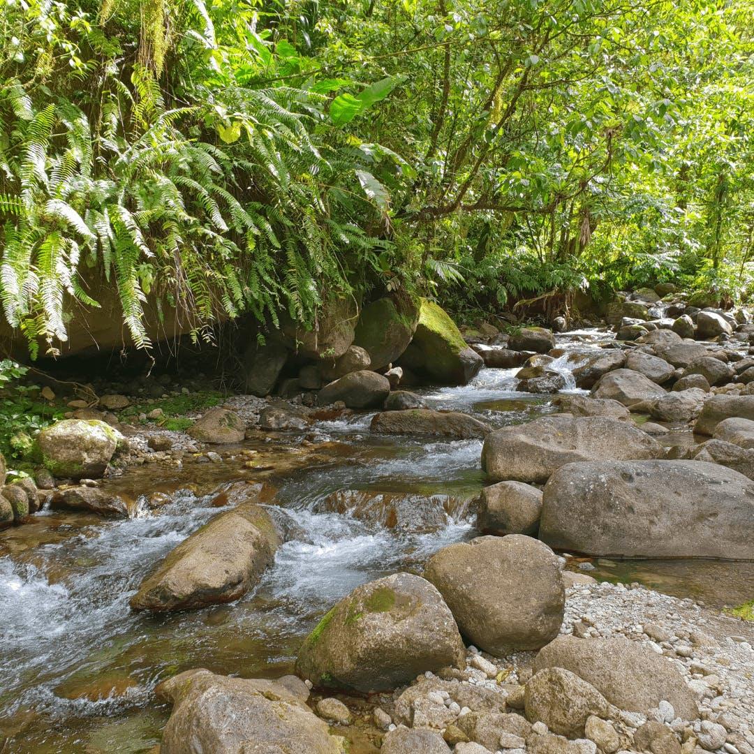 Rivière Balata Martinique