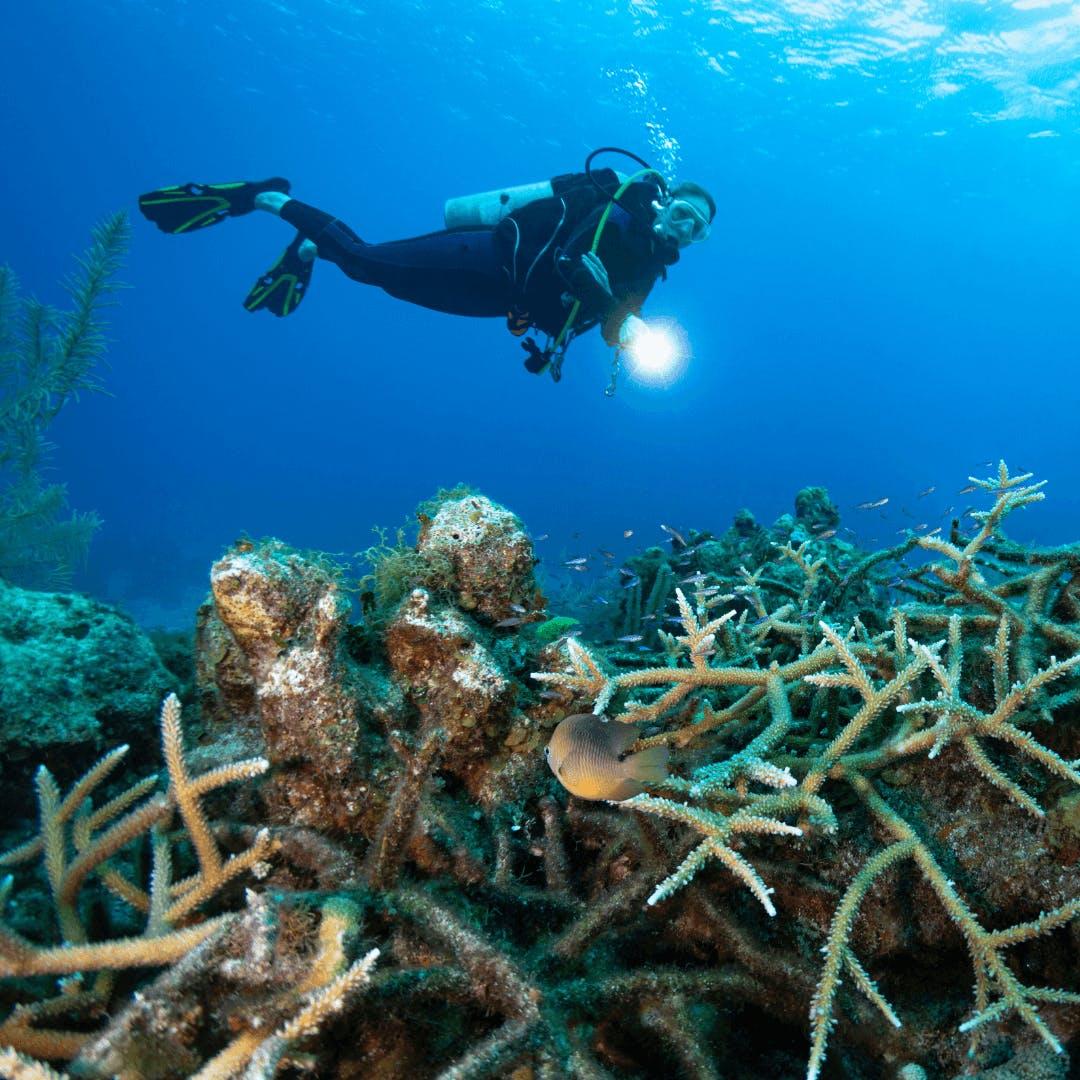 Plongée sous-arine en Martinique