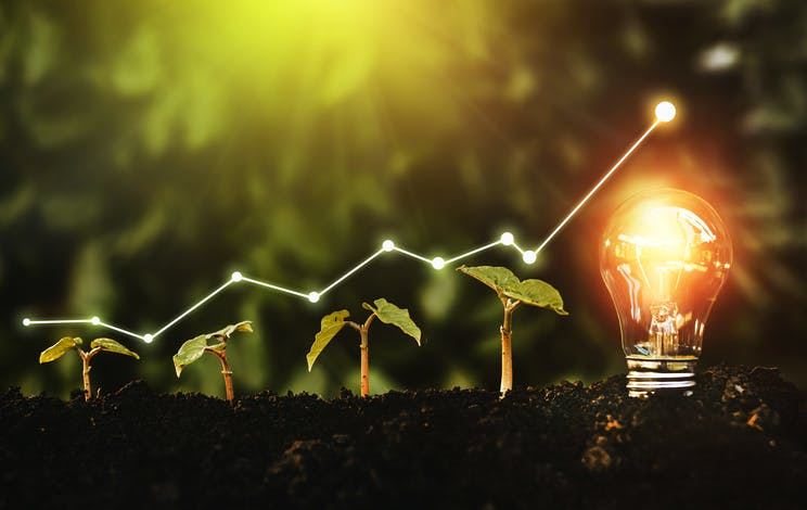 Image shows a line of four seedlings growing in size from left to right ending in a glowing lightbulb