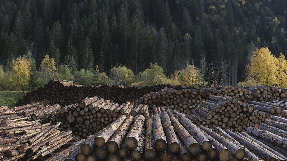 Formafantasma, Cambio, Val di Fiemme, Wood processing, 2020